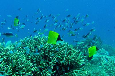 diving400x265web