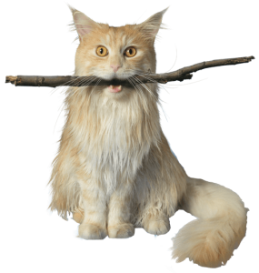 cat-stick-transparent